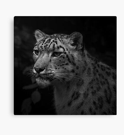 Snow Leopard Portrait, Paradise Wildlife Park Canvas Print