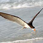 A Skimmer Skimming! by jozi1