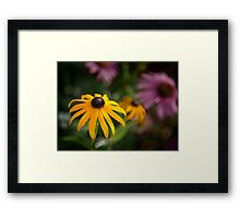 Summer Glory Framed Print