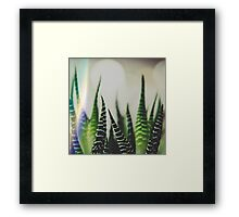 A Little Light Flare Never Hurt A Zebra Framed Print