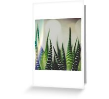 A Little Light Flare Never Hurt A Zebra Greeting Card
