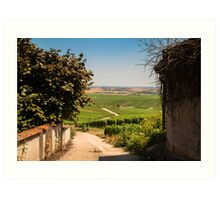 Vineyard view Art Print