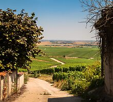 Vineyard view by Geofigeofa