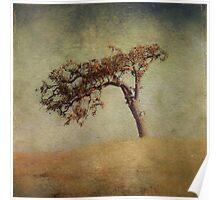 Mother Oak Poster