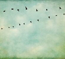 A Flock Of Seagulls by Honey Malek