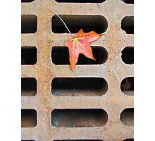 Autumn Calling Photographic Print