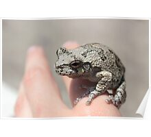 A Frog on the Hand Poster