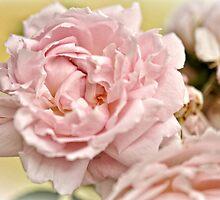 Blush by Karen E Camilleri