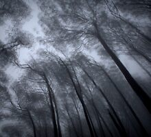 Wind In TheTree Tops by Ben Loveday