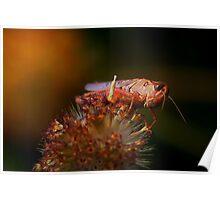 High Desert Shrimp Poster