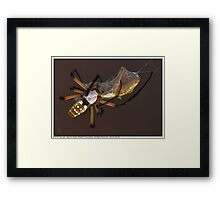 Grasp of the Zigzag Spider! Framed Print