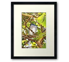 Young, well-fed jay Framed Print