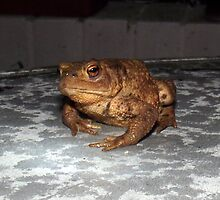 Toad by Chris Goodwin
