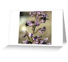 Pet the Bumblebee Greeting Card