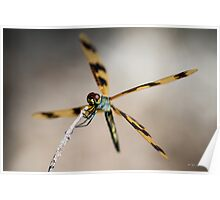 Dragonfly #1 Poster
