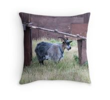 I am the eldest in my domain Throw Pillow