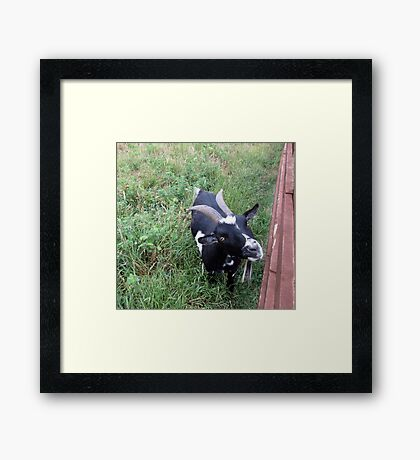 hello look at me Framed Print