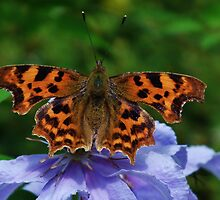 Comma by BevWallace