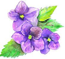 Three Violets by Sorazal