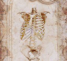 TORSO by Elizabeth Burton