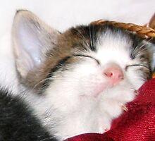 Cat Nap by Nadya Johnson