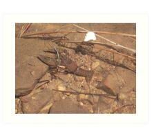 Crab at Willow Springs Lake, Forest Lakes, Arizona Art Print