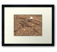 Crab at Willow Springs Lake, Forest Lakes, Arizona Framed Print