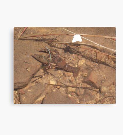 Crab at Willow Springs Lake, Forest Lakes, Arizona Canvas Print