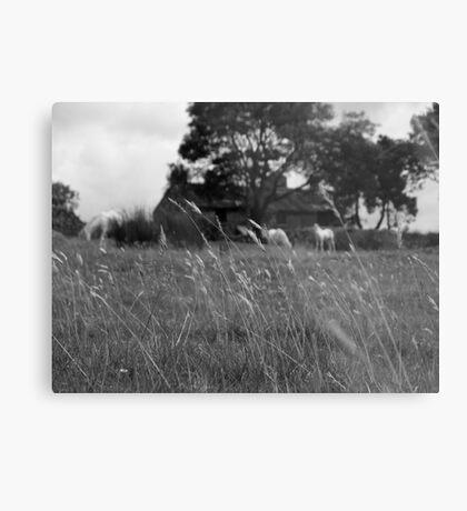 Ditsworthy Meadow Metal Print