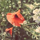 Flower Dreams by Jane M.
