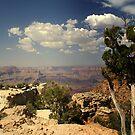 Grand Canyon by stevefinn77