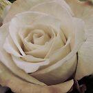 Sepia Rose by WildestArt