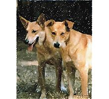 Carolina Dog Portrait Photographic Print