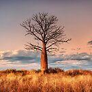 A Pastel Sunset by Mieke Boynton