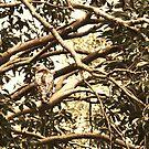 Lovely Hawk by DearMsWildOne
