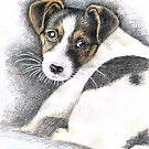 Jack Russell Terrier Puppy  by Nicole Zeug