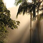 Foggy Winter Morning by aussiebushstick