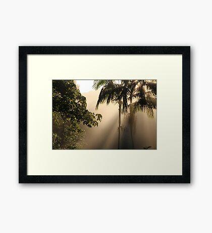 Foggy Winter Morning Framed Print
