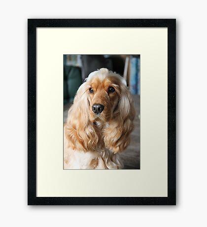 Jessie: My English Cocker Spaniel Framed Print