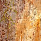 'Cinar' (Eucalyptus Inscription) by Mike  Waldron