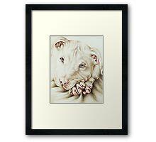 White Pit Bull Dog Drawing Framed Print