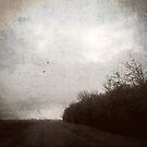 Lane by Nikki Smith