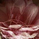 Enhancing my Dreams by Lozzar Flowers & Art