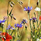 Wildflowers by annalisa bianchetti