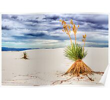 Soaptree Yucca at White Sands, New Mexico Poster