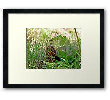 Hello Mr. Box Turtle Framed Print