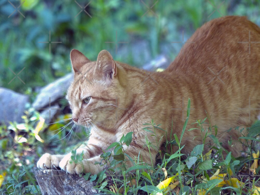 Sharpening those Claws by Susan S. Kline