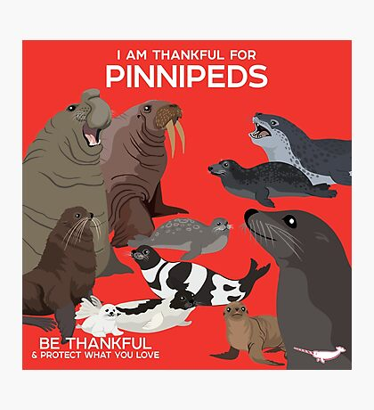 I Am Thankful For Pinnipeds Photographic Print