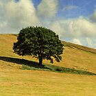 The Tree (Summer) by David Rothwell