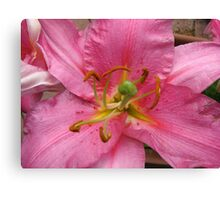 Bee Ready - Pink Lily Macro Canvas Print
